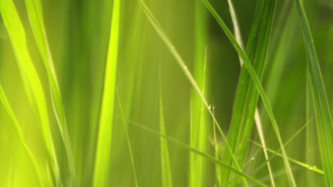 Racking focus close up of grass Footage