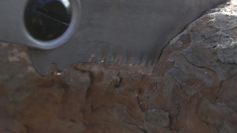 Sawing pine trunk with hand saw Footage