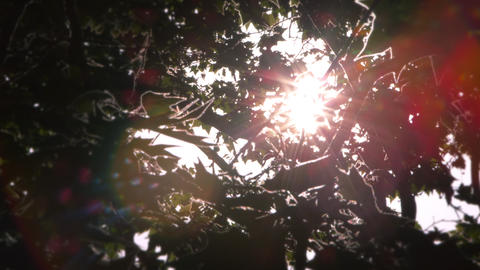 Sun behind branches of tree in Rome Footage
