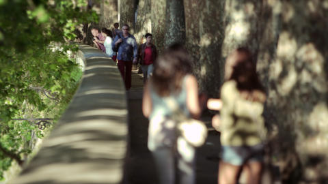 Slow motion tree-lined walkway in Rome Footage