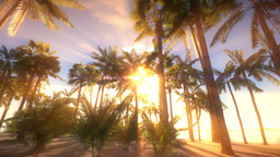 Dolly Shot In Heavenly Tropical Island Environment stock footage