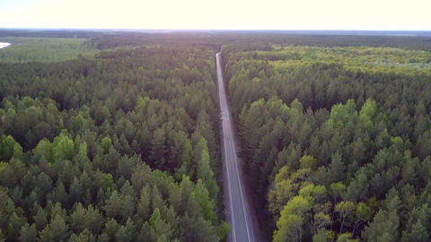 motion above pine forest tops along straight road with cars Live Action