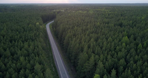 boundless dark forestry landscape with asphalt road in dusk Live Action