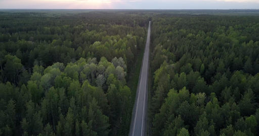 aerial view straight road cuts through dense forest in dusk Live Action