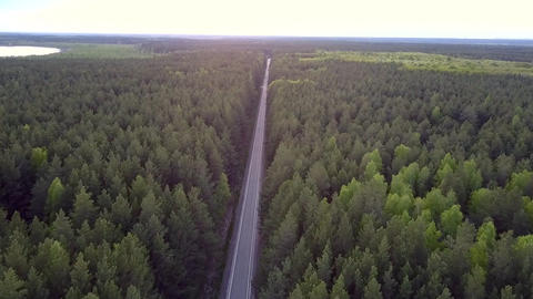 bird eye view long straight road crosses pine forest Live Action