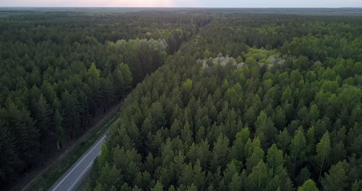 endless dark coniferous forest landscape with road in dusk Live Action