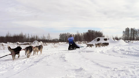 Two teams of sled dogs with mushers Footage