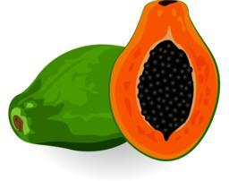 Papaya vector illustration Vector