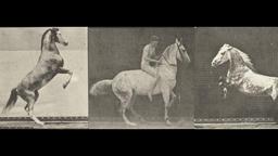 Horses Rearing Three Film Animation Loop Footage
