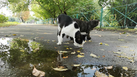 Two cats near puddle on the street Live Action