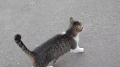 The cat runs along the asphalt Footage