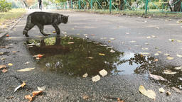Grey cat drinks from the puddle on the street - 4k shot Live Action