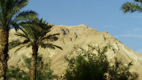 Stock Video Footage of a mountain and Ein Gedi palm trees shot in Israel at 4k w Footage