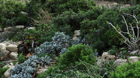 Royalty Free Stock Video Footage of vegetation amid rocks at Ein Gedi shot in Is Footage