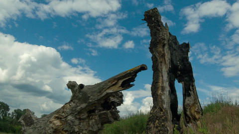 Timelapse with broken old wood tree and sky clouds Footage