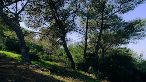 Royalty Free Stock Video Footage of forested hillside shot in Israel at 4k with  Footage