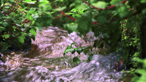 Stock Video Footage closeup of foliage and water in an aqueduct shot in Israel a Footage