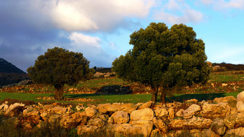 Royalty Free Stock Video Footage of a pastoral hillside shot in Israel at 4k wit Footage