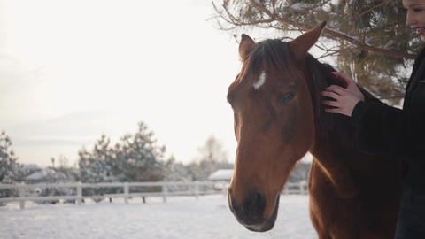 Beautiful girl touching the mane of a beautiful horse and strokes her muzzle on Live Action