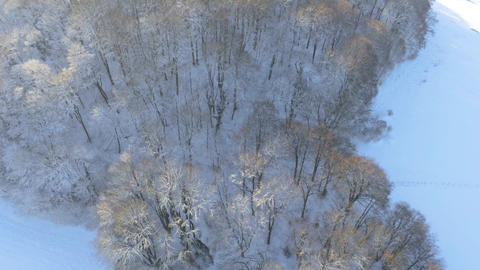 Flying over snow covered forrest during sunny winter day in German Eifel close to Aachen Live Action