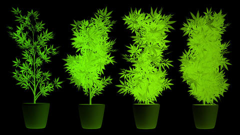 Cannabis Plants in Abstract Lights 3D AnimationMarijuana legalization happens in Canada on October Animation