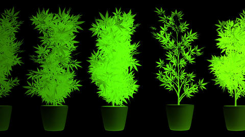 Cannabis Plants in Abstract Lights Looping 3D AnimationMarijuana legalization happens in Canada on Animation