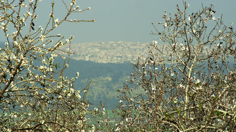 Stock Video Footage of a city seen through almond branches shot in Israel at 4k  Footage