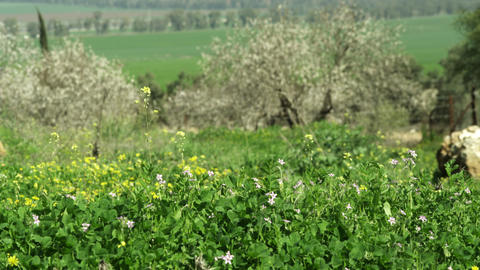 Royalty Free Stock Video Footage of fields and trees shot in Israel at 4k with R Footage