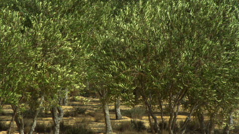 Royalty Free Stock Video Footage of an orchard oasis shot in Israel at 4k with R Footage