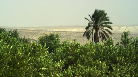 Royalty Free Stock Video Footage of oasis treetops shot in Israel at 4k with Red Footage