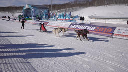 Kamchatka Kids Competitions Sled Dog Race Dyulin Beringia GIF