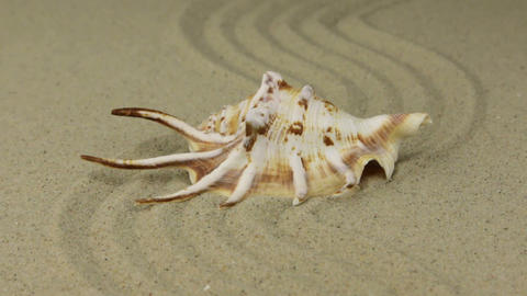 Zoom. Beautiful sea shell lying on a zigzag made of sand Footage