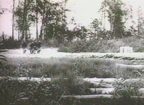 military chronicle Stock Video Footage