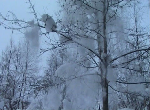 Winter Forest Stock Video Footage