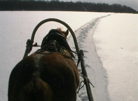 Horse and sleigh Stock Video Footage