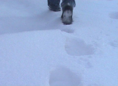 Steps in the snow Stock Video Footage