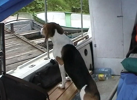 Dog boat Stock Video Footage