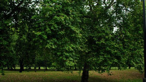 Trees in Hyde Park in London, England Footage