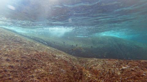 Moving between granite boulder coral reef Footage