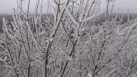 Tree branch covered with ice, silver thaw Footage