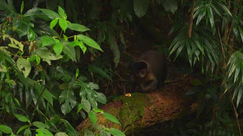 Racking focus jungle footage Footage