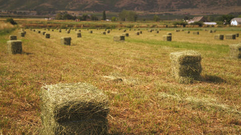 Static shot of rows of bails of hay Footage