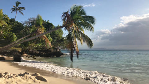 Paradise Island with a palm tree on the ocean in Dominican Republic GIF
