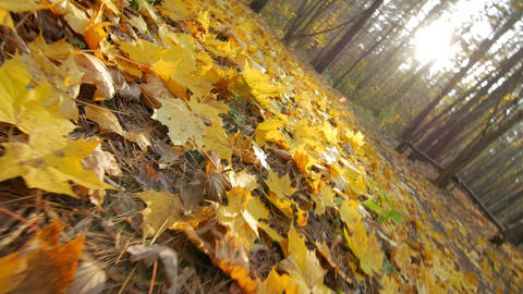 Rotating low angle shot in autumn forest Footage