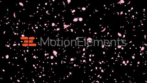 桜吹雪テンプレートParticular2.5使用 After Effectsテンプレート