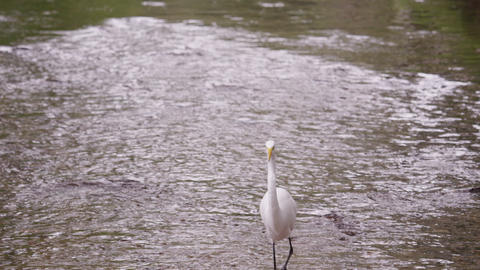 Shot of white egret-looking bird wading in water in Brazil Footage