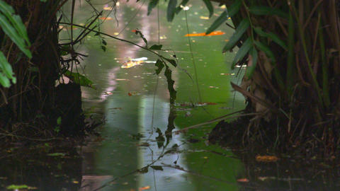 Static shot of water and vegetation in botanical garden in Rio Footage