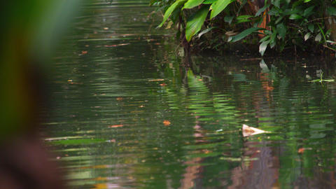 Shot of rippling water in Botanical garden in Brazil Footage
