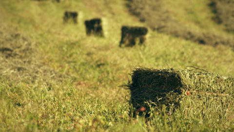 Static shot of hay bales on the field Footage