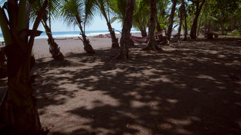 Dolly shot of the beach taken from behind the palm trees Footage